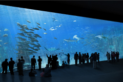 grande baie virtuelle