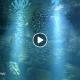 Premiers poissons dans le grand bassin